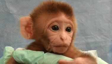 Estos 5 Animales Bebé Explotados Quieren Volver con sus Madres