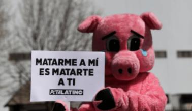 PETA Compra Acciones de Mataderos Para Ayudar a Evitar la Próxima Pandemia