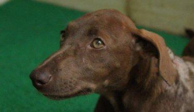 VIDEO: Esta Cachorrita Quemada con Ácido fue Rescatada — ¡Mírala Ahora!