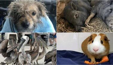 Video: Estos Son Algunos de los Animales que PETA Rescató con tu Ayuda Este Año