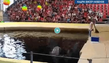 Video: Delfín Bebé en Cautiverio Muere en Pleno Show