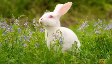 Dove obtiene sello de aprobación libre de crueldad, agregada a lista de 'Belleza sin crueldad'