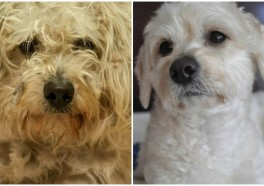 Extreme Makeover: Rescued-Dog Edition (You Have to See It to Believe It!)