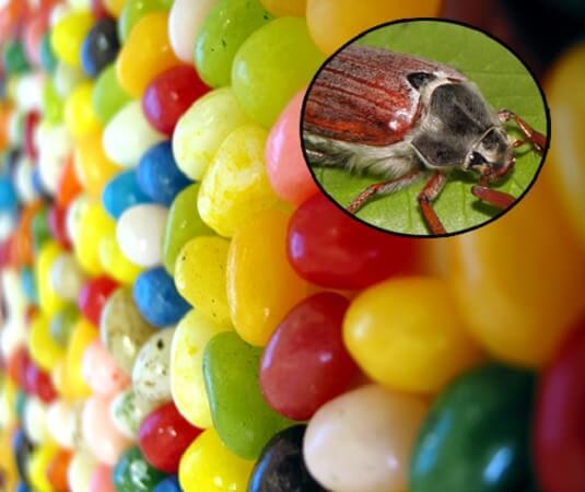 jellybean2