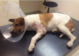 Video: Watch This Injured Puppy's Miraculous Transformation