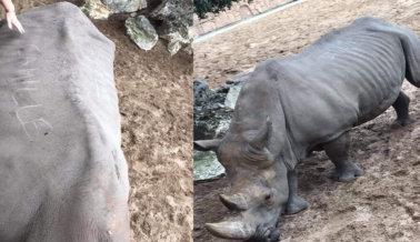 Gente Marca sus Nombres en la Piel de una Rinoceronta Anciana