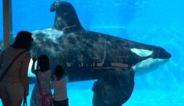 SeaWorld al descubierto: Una veterinaria visita el SeaWorld