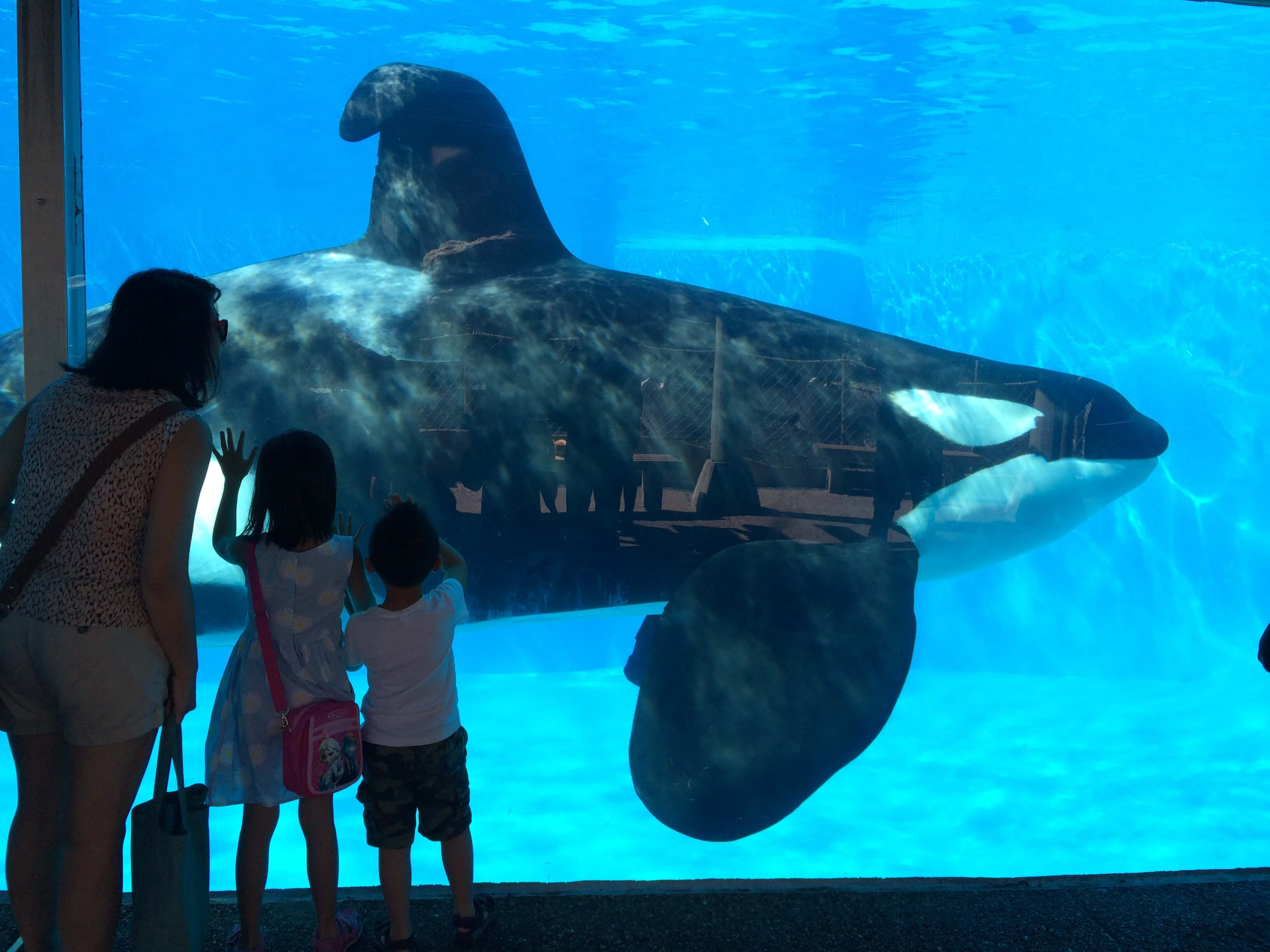 kids-seaworld-dorsal-fin- orca