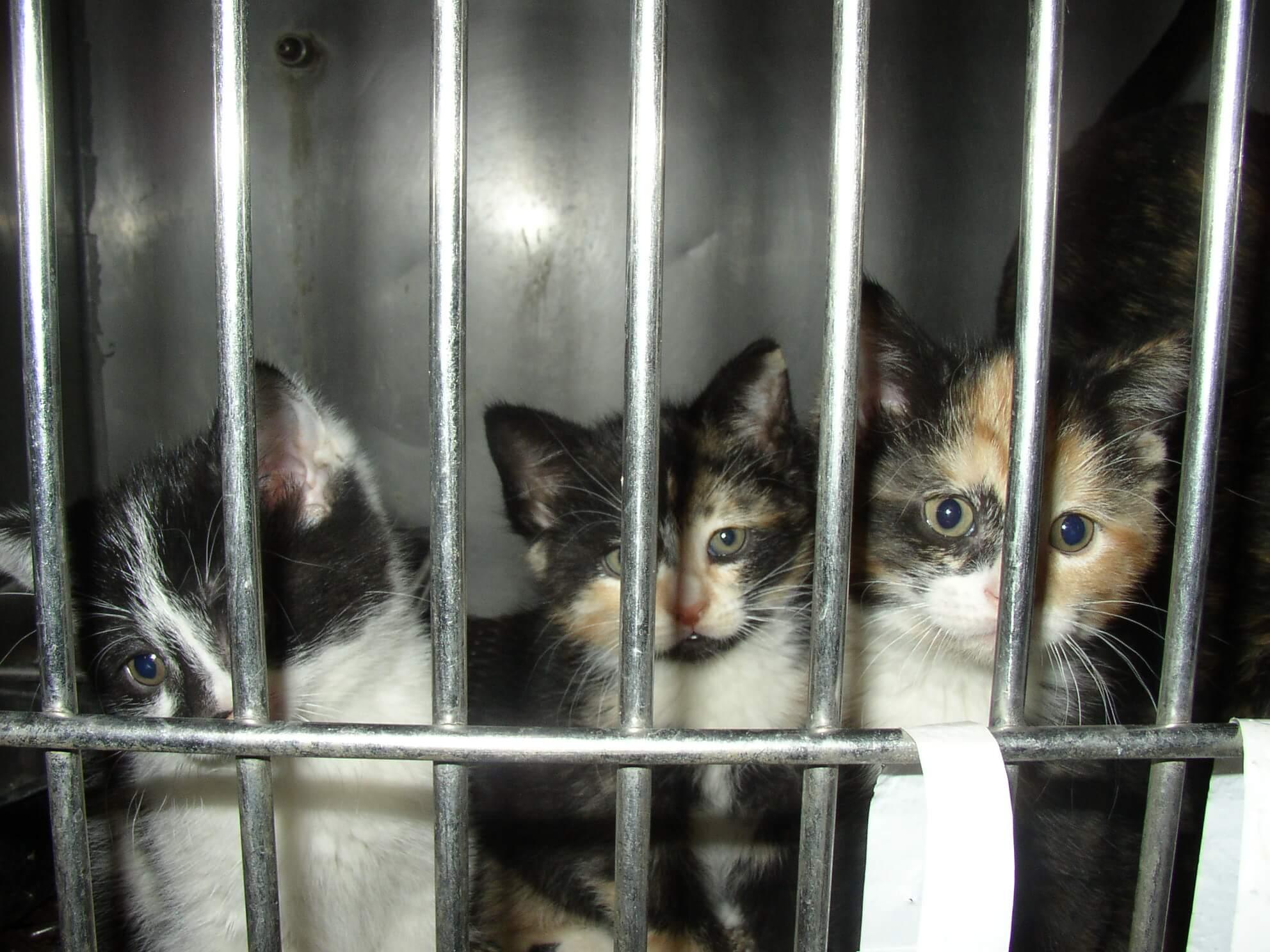 kittens in shelter