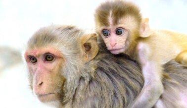 5 Monos Bebé Murieron en 2 Días: PETA le Pide al Fiscal de Distrito que Investigue