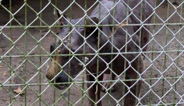 PETA Confirma que Tigresa Atrapada en Waccatee Zoo ha Muerto