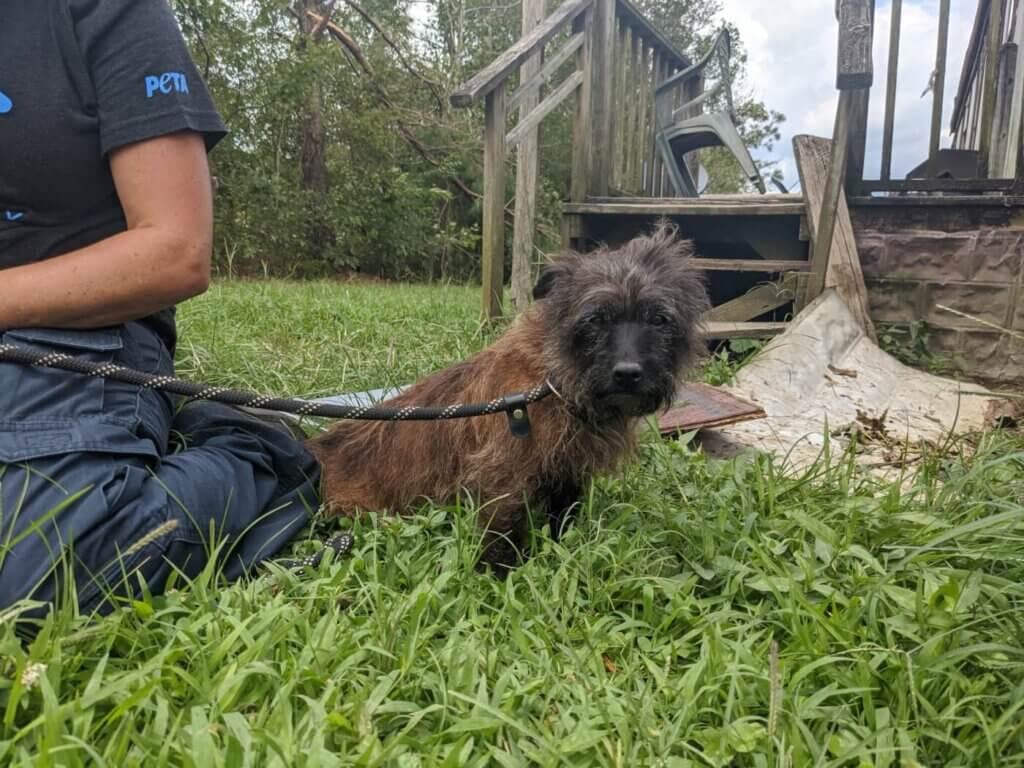 Little dog after tornado