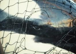Celebridades protestan en Miami Seaquarium para liberar a la orca Lolita