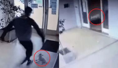 VIDEO: El Ataque a Patadas a la Perrita Mía No Debe Quedar Impune