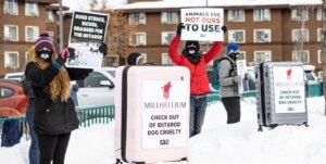 Demostacion de PETA contra Iditarod