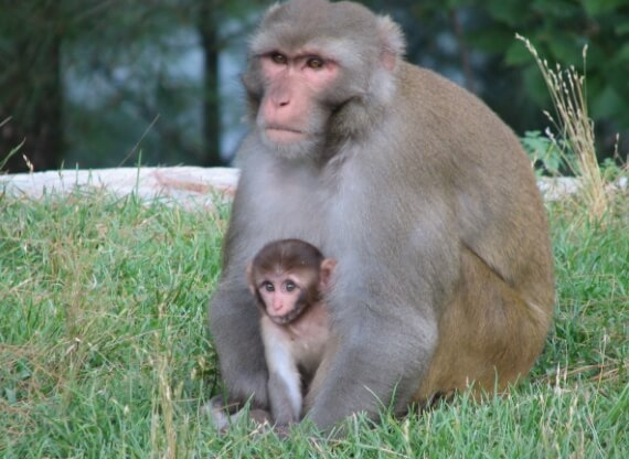 mom monkey-and-baby-855240
