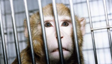 ¿Cuáles Son las Desventajas de la Experimentación Animal? PETA Pone al Descubierto la Crueldad en los Laboratorios
