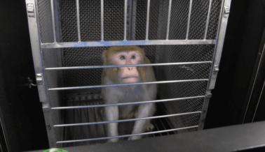 PETA Tala el 'Árbol Genealógico' de la Experimentadora Elisabeth Murray