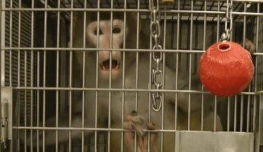 11 Estadísticas Indignantes de Experimentos en Animales