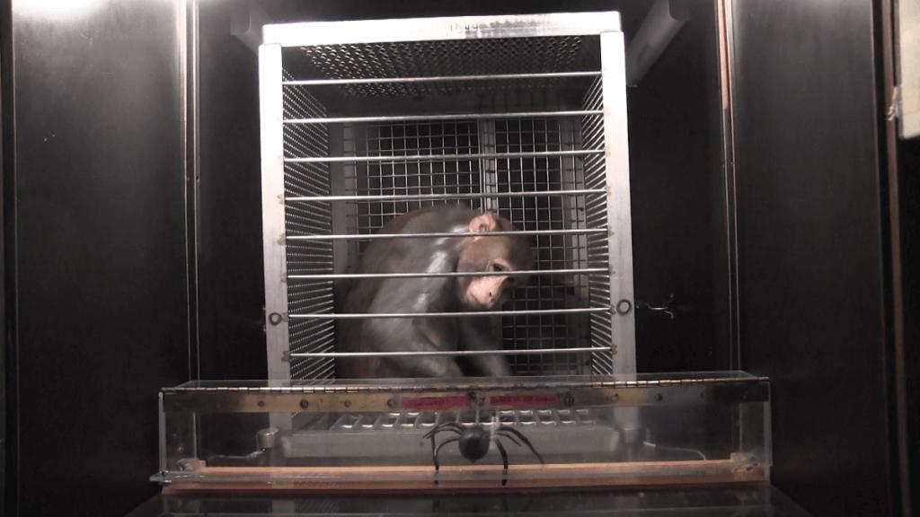 mono y araña falsa