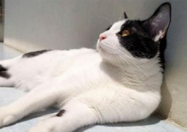 Mayoral 'Candigato' Urged to Fix Mexican Town's 'Kittyzens'