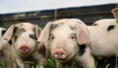 ¡Excelente noticia! No se usarán más animales en capacitación médica en EE.UU. y Canadá