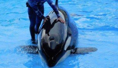 Despidos en SeaWorld Motivan a PETA a Buscar Informantes