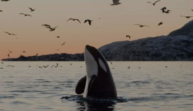 ¡Excelente Noticia! Experiencias de Airbnb Prohíbe SeaWorld, Paseos en Elefantes, Contacto con Cachorros de Tigre y Más