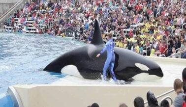 50 Cosas Terribles que Ha Hecho SeaWorld Desde la Captura de Corky Hace 50 Años