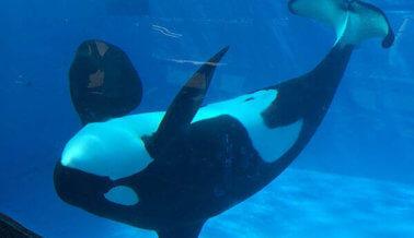 Dile a la Cadena Telemundo Que: ¡Promover a SeaWorld no es Periodismo!