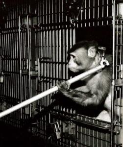 original_monkey_training-PPI