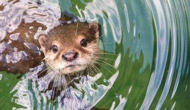 Nutria se ahoga después de que los trabajadores del zoológico le dieran un par de pantalones