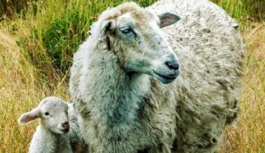 PETA Insta a J.Crew a Salvar su Marca Dejando de Vender Cachemira y Lana