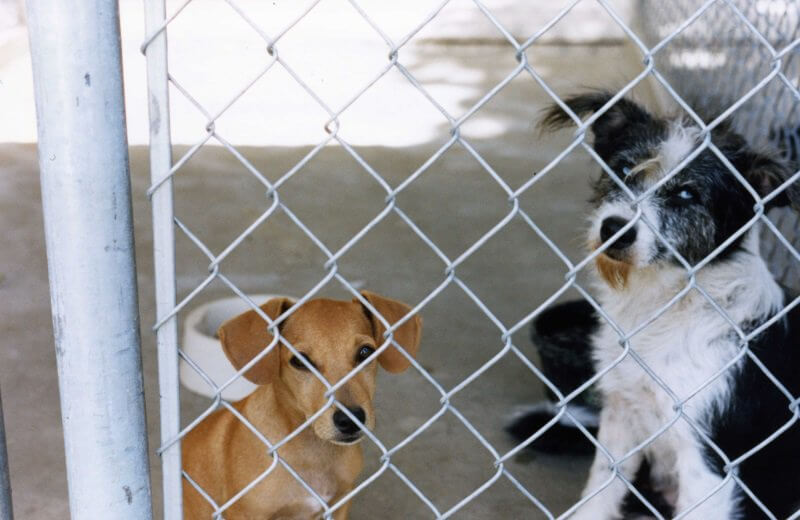 dogs in cage in shelter