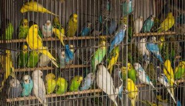 Las Aves No Pertenecen a las Jaulas, ¡Punto!