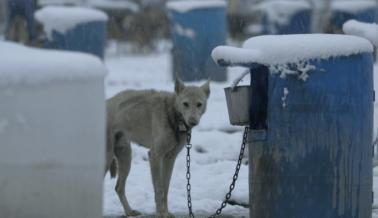 10 Mushers del Iditarod tienen Antecedentes Penales