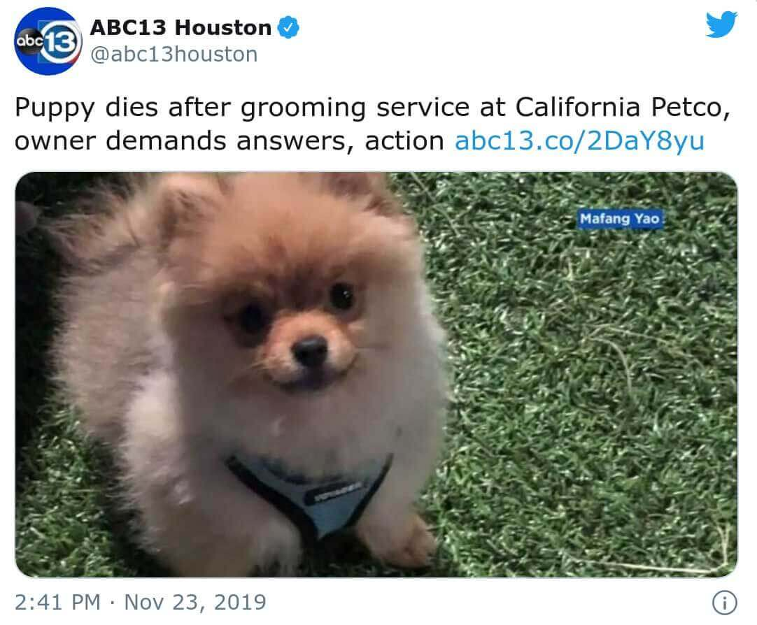 Dali el perro muere en petco