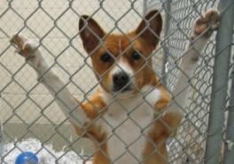 Video: Perros cortados, abandonados a morir en un techo