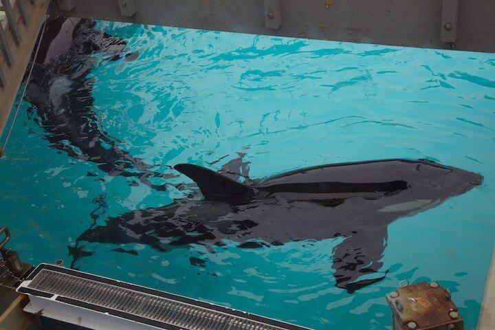 Orca tank at SeaWorld San Diego, 2011.