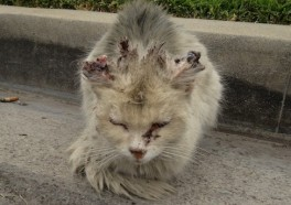 PETA Offers $2,500 Reward for Arrest of Puerto Rico Cat Killers