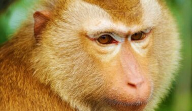 Posible Corrupción, Mono se Escapa: Es Hora de Cerrar Centro de Primates
