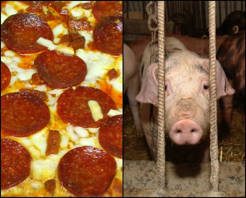 pizza and pig 245151