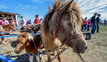 El Horror de los Paseos en Poni y los Carruseles con Animales Vivos