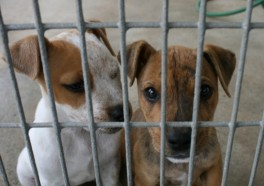 These Dogs Were Put in Crates—and Never Came Out