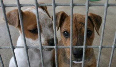 Estos perros fueron enjaulados –y nunca salieron