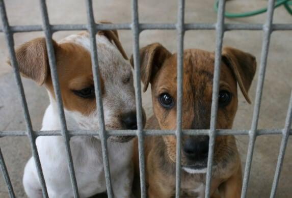 8 razones para adoptar y no comprar perros o gatos