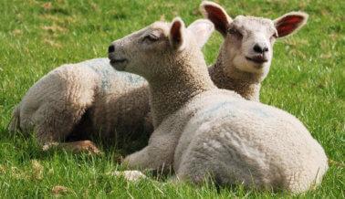 ¿Qué tiene de malo la lana?