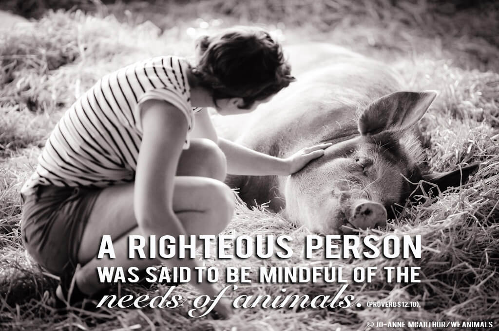 Animal Rights Quotes Mesmerizing The Bible And The Animal Rights Movement  Blog  Peta Latino