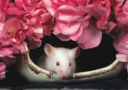 Maker of Newport Cigarettes Bans Animal Tests