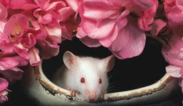 Fabricante de cigarrillos Newport prohíbe experimentos en animales